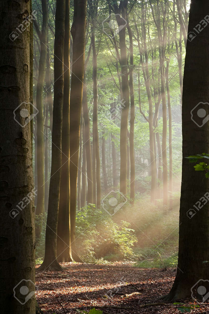 Sunny morning in an early autumn forest; sun rays are visible in a light haze. Stock Photo - 1118065