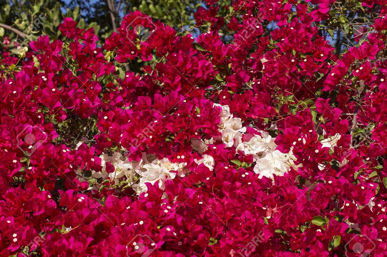Closeup Of A Beautiful Flowers In Balboa Parkcalifornia Stock