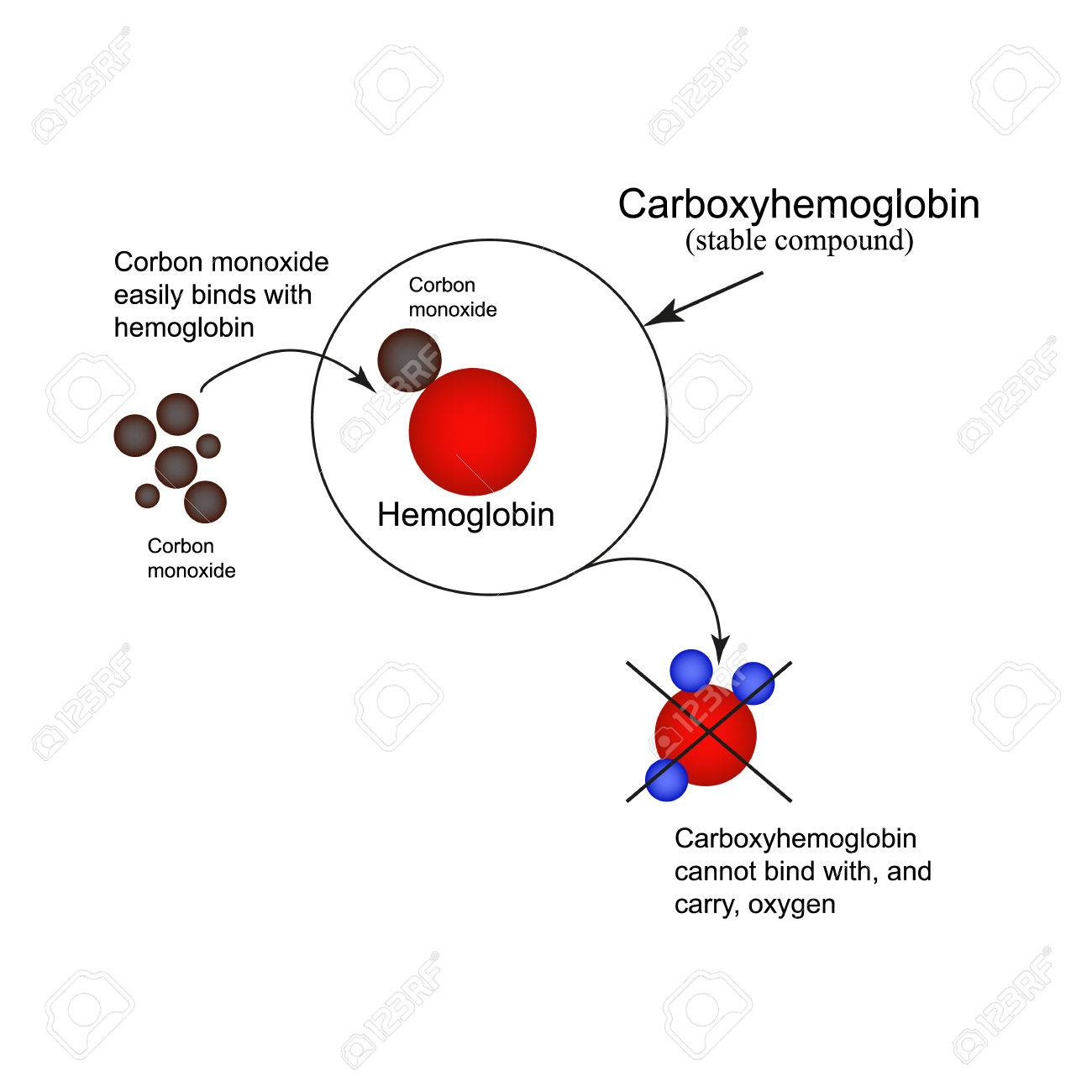 Carboxyhemoglobin joining the hemoglobin carbon monoxide the joining the hemoglobin carbon monoxide the inability to transport oxygen carbon monoxide pooptronica Images