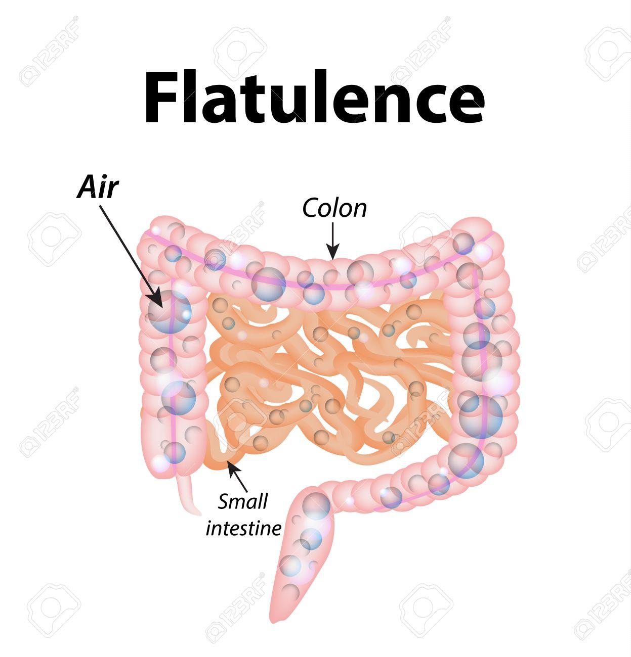 Flatulence Gases In The Small Intestine The Gases In The Colon