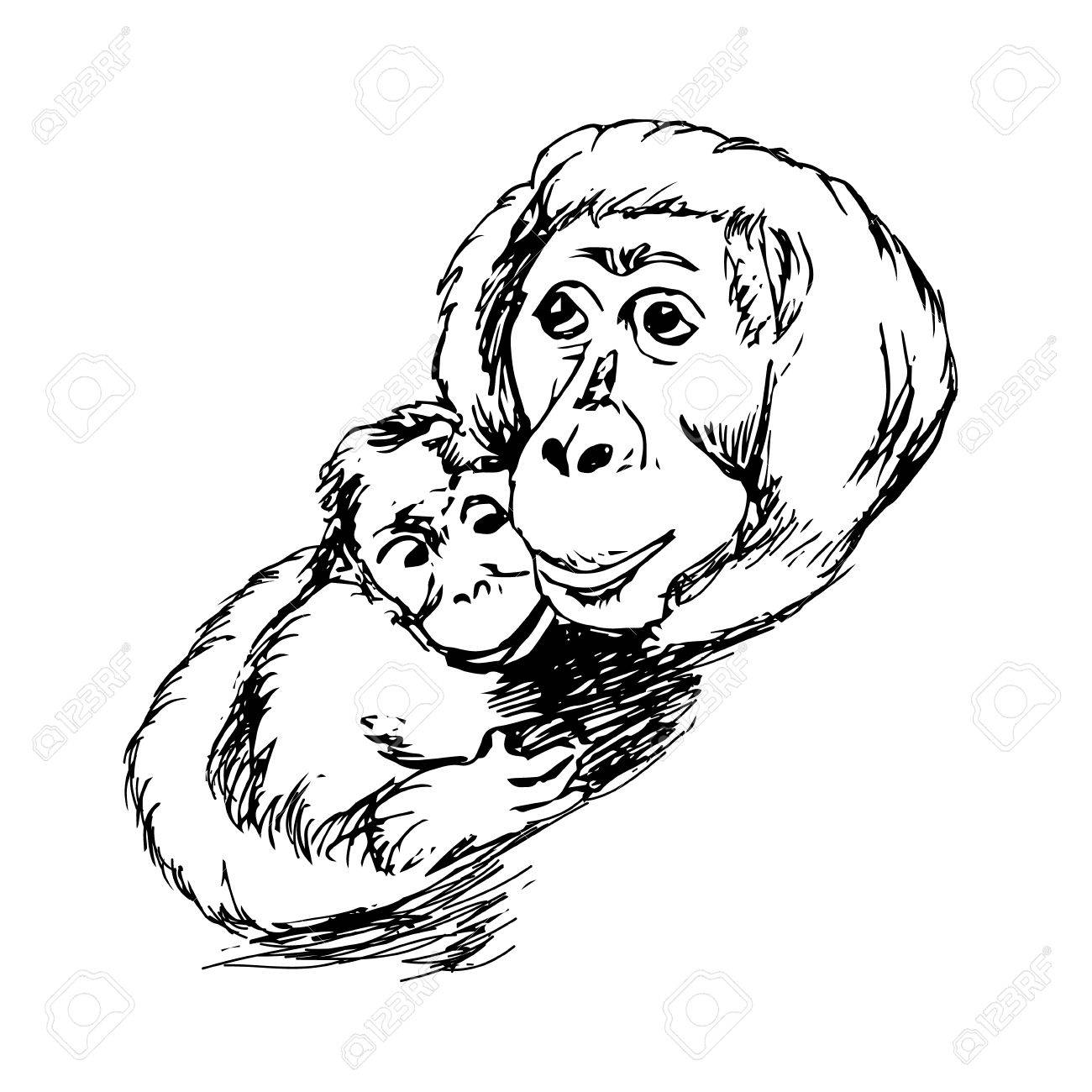 The Graphic Image Of The Monkey, Monkey Head, The Face. Drawing By ... for Line Drawing Monkey  110zmd