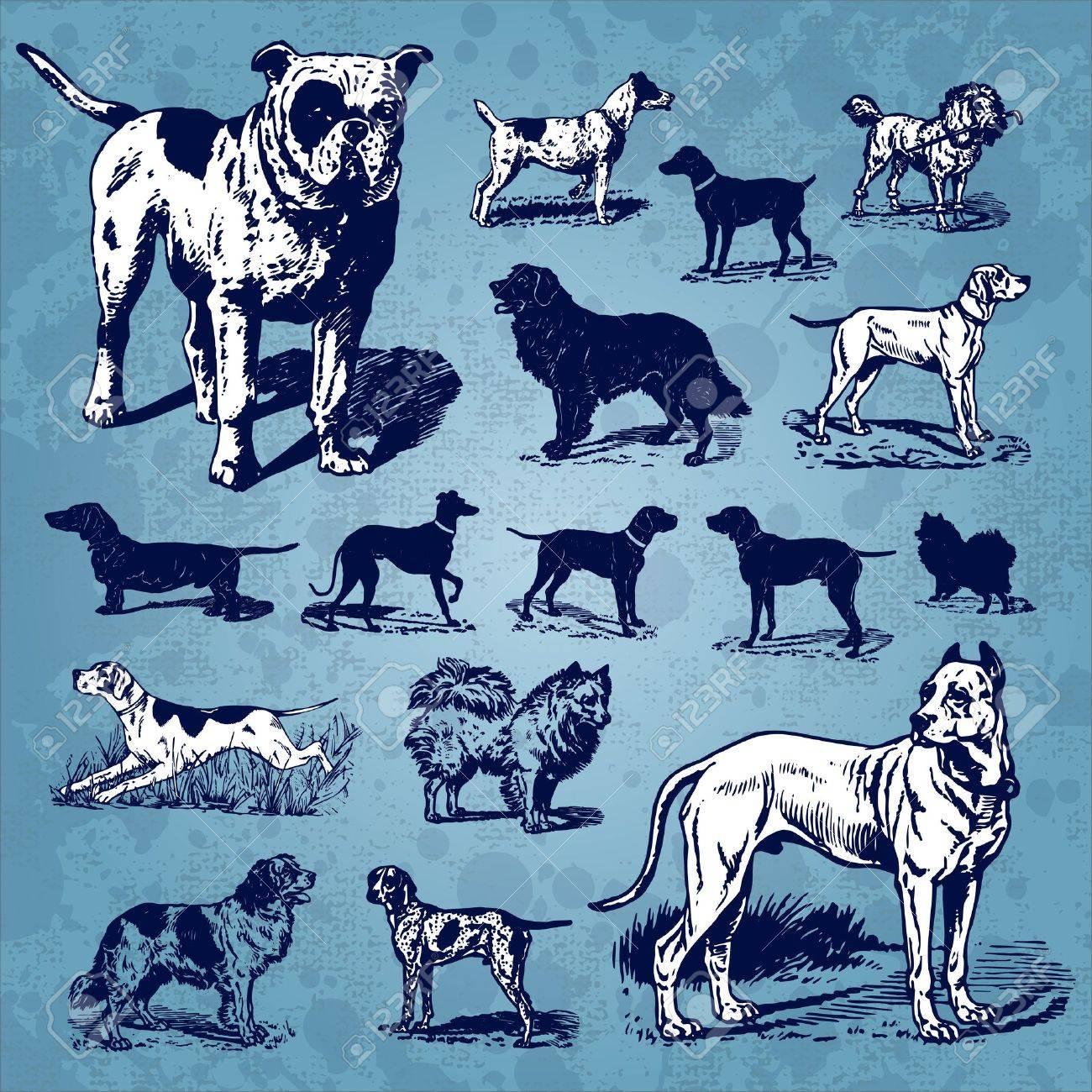 dogs vintage set (vector) Stock Vector - 9320301