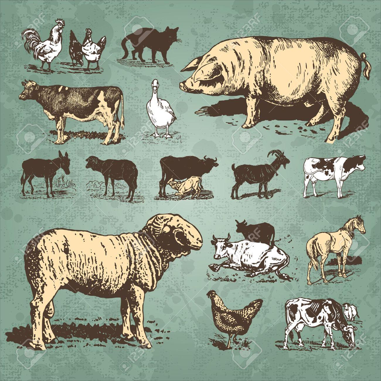 vintage farm animals set (vector) Stock Vector - 9320302