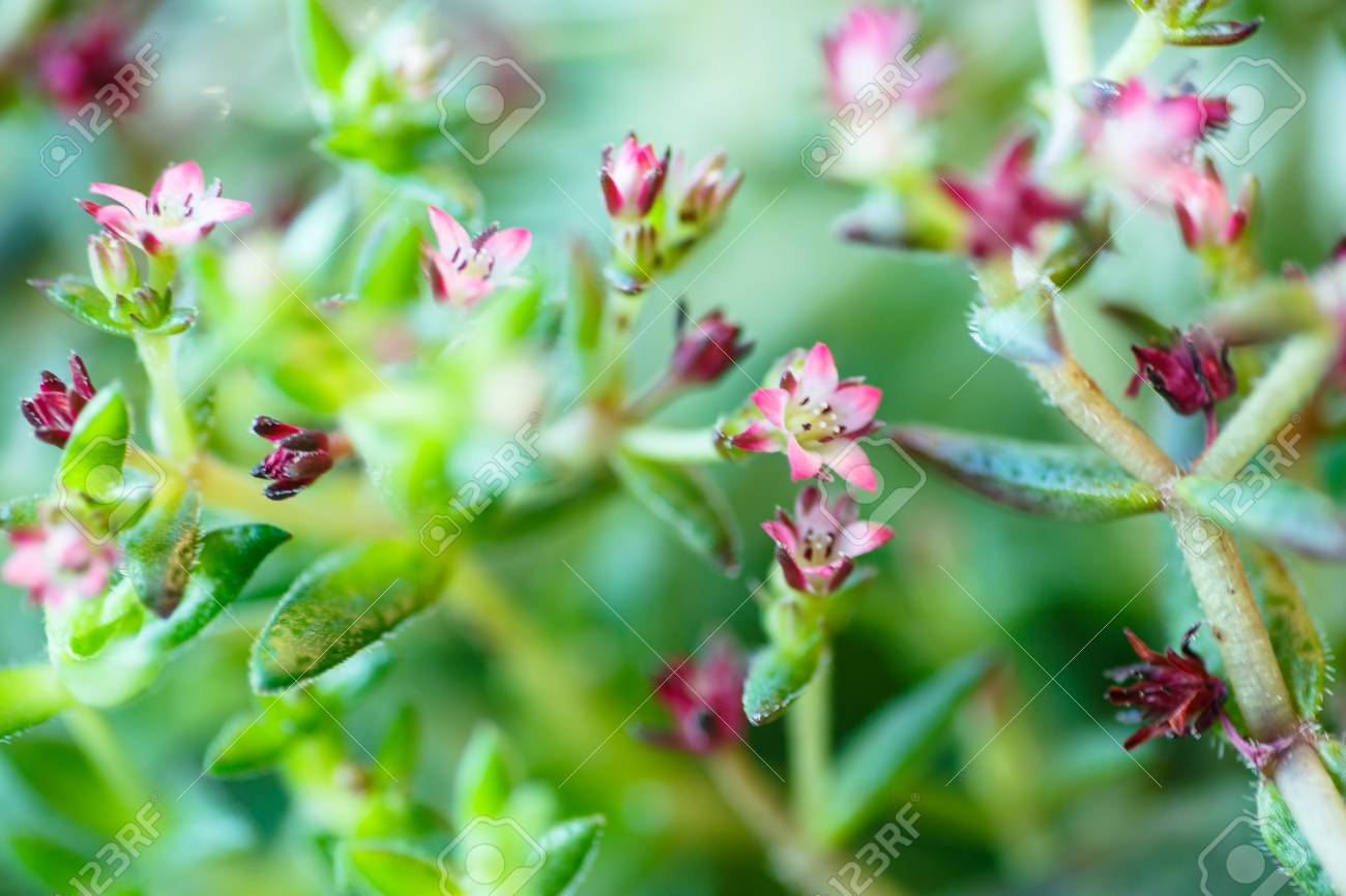 Very small pink flowers macro the name is not know stock photo stock photo very small pink flowers macro the name is not know mightylinksfo