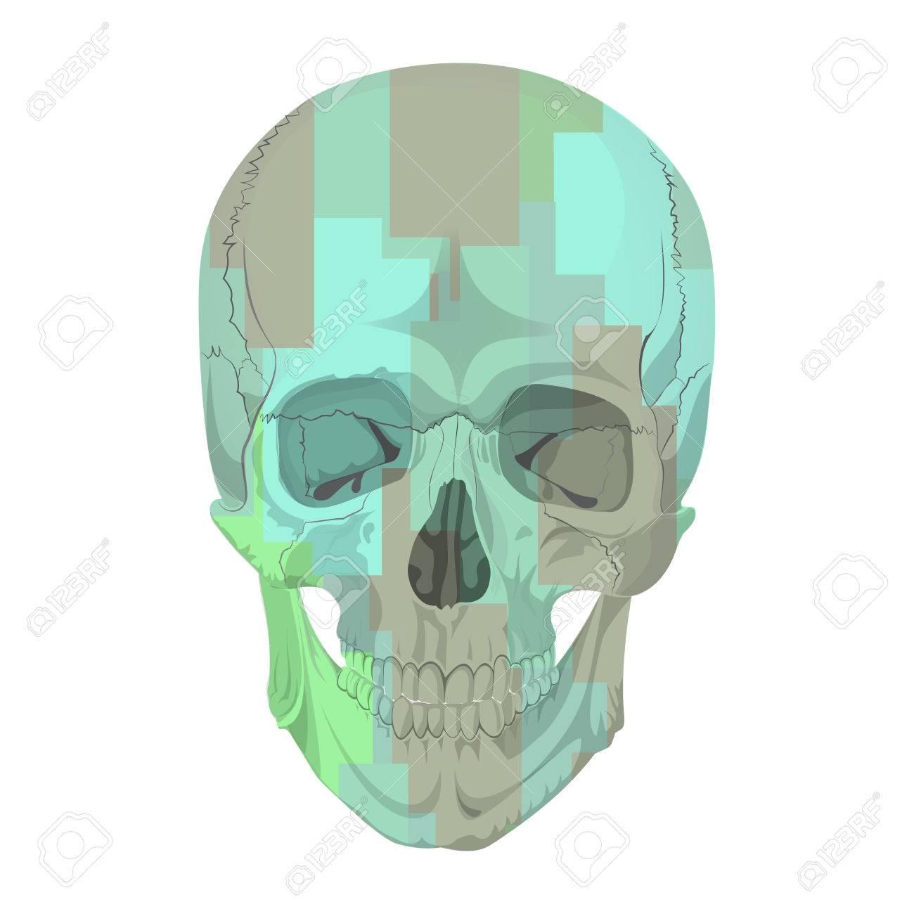 Menschlichen Schädelknochen Skelett Tot Anatomie Illustration ...