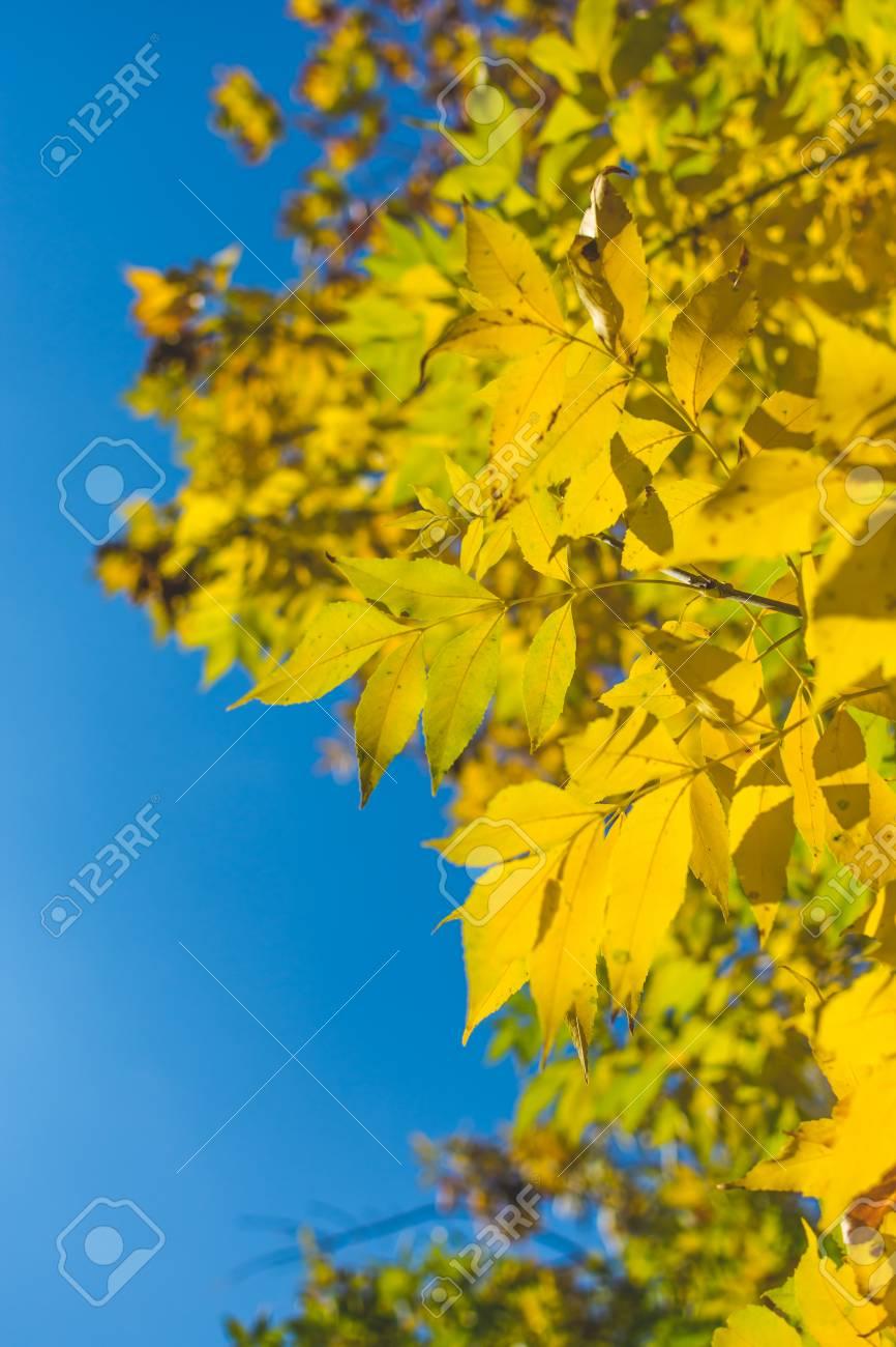 Schönes Herbstgelblaub. Der Herbst Ist Gekommen Und Die Blätter ...