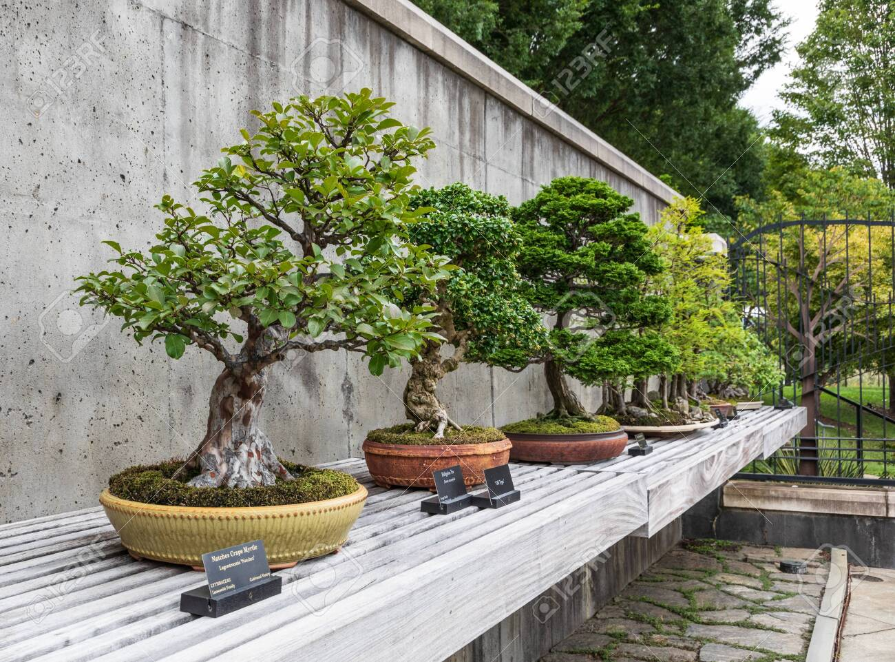 Asheville Nc Usa 26 Aug 2019 A Row Of Bonsai Trees In The Stock Photo Picture And Royalty Free Image Image 131041532