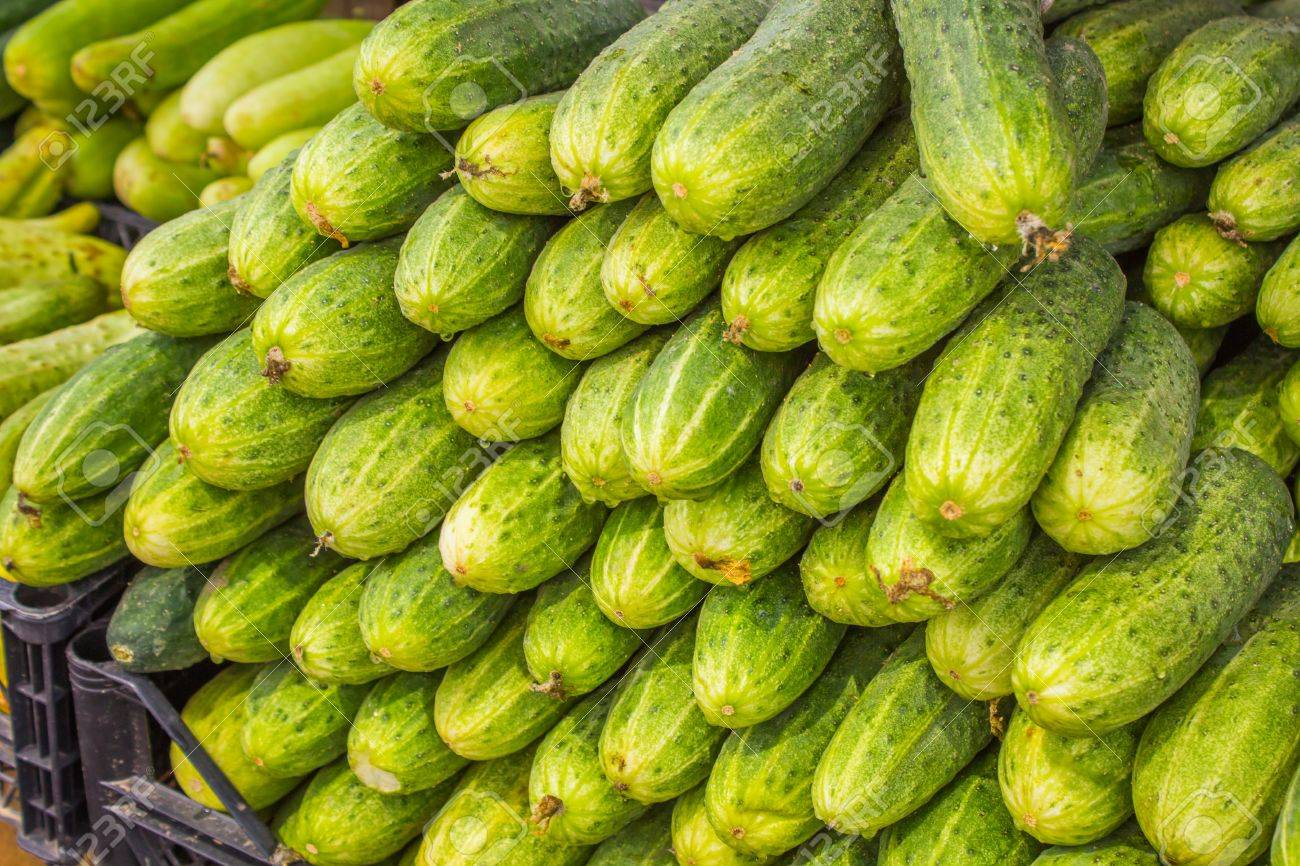 Big juicy ripe cucumbers in a pile on the counter market - 60870545