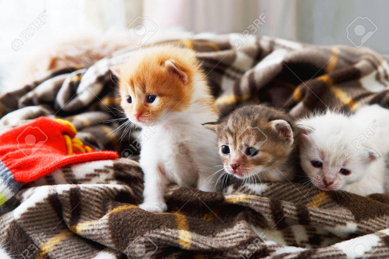 while-kitten-nati-young-salvador-girls