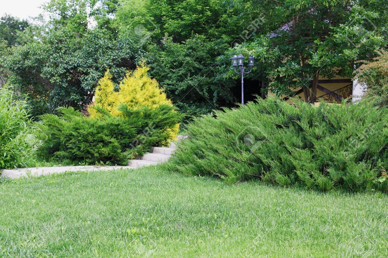 Beau design paysager, jardin avec buissons à feuilles persistantes, sapins,  épicéas et arbustes au soleil. Aménagement paysager moderne. Conception de  ...