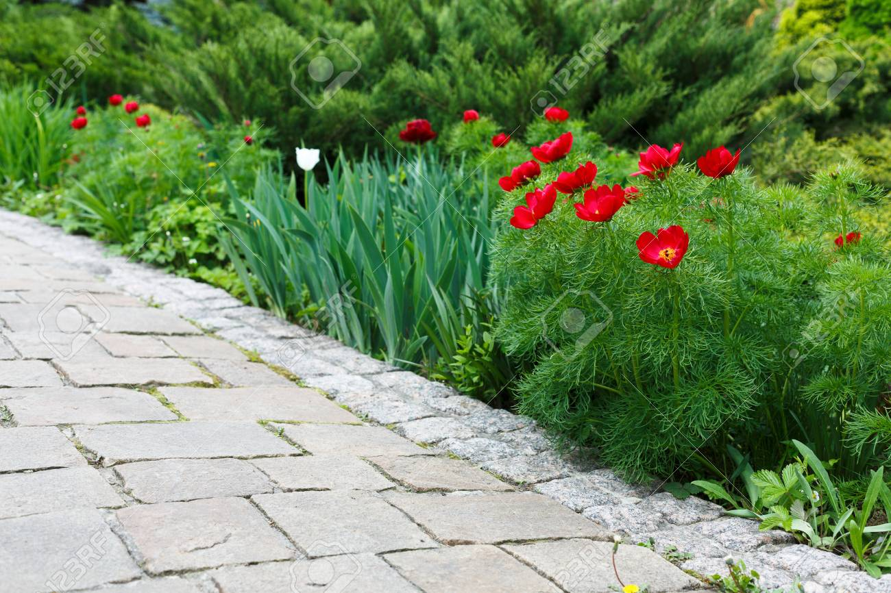 Tulipes rouges près de chemin de jardin. L\'aménagement paysager du jardin.  aménagement paysager moderne. Parterre de fleurs et à feuilles persistantes  ...