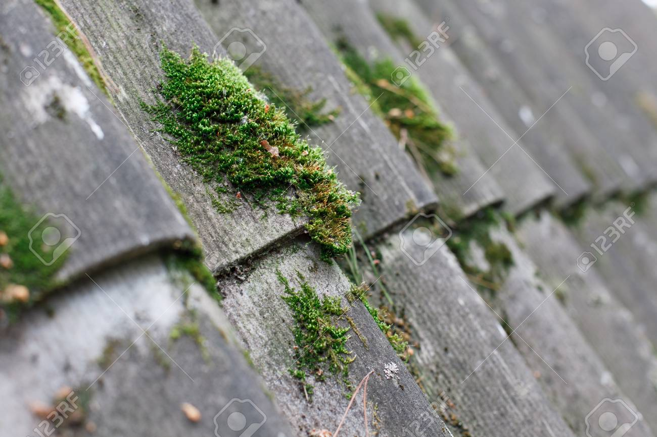 Texture of gray fiber asbestos roof sheets with green moss, closeup. Pattern of weathered old roof, rustic background - 95260740