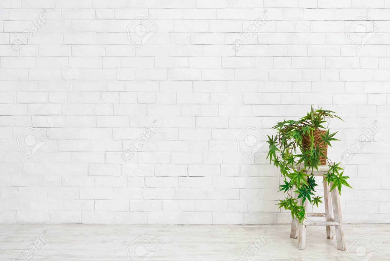 Indoor Green Plants In Flowerpots On Table At White Brick Wall Stock Photo Picture And Royalty Free Image Image 118834614