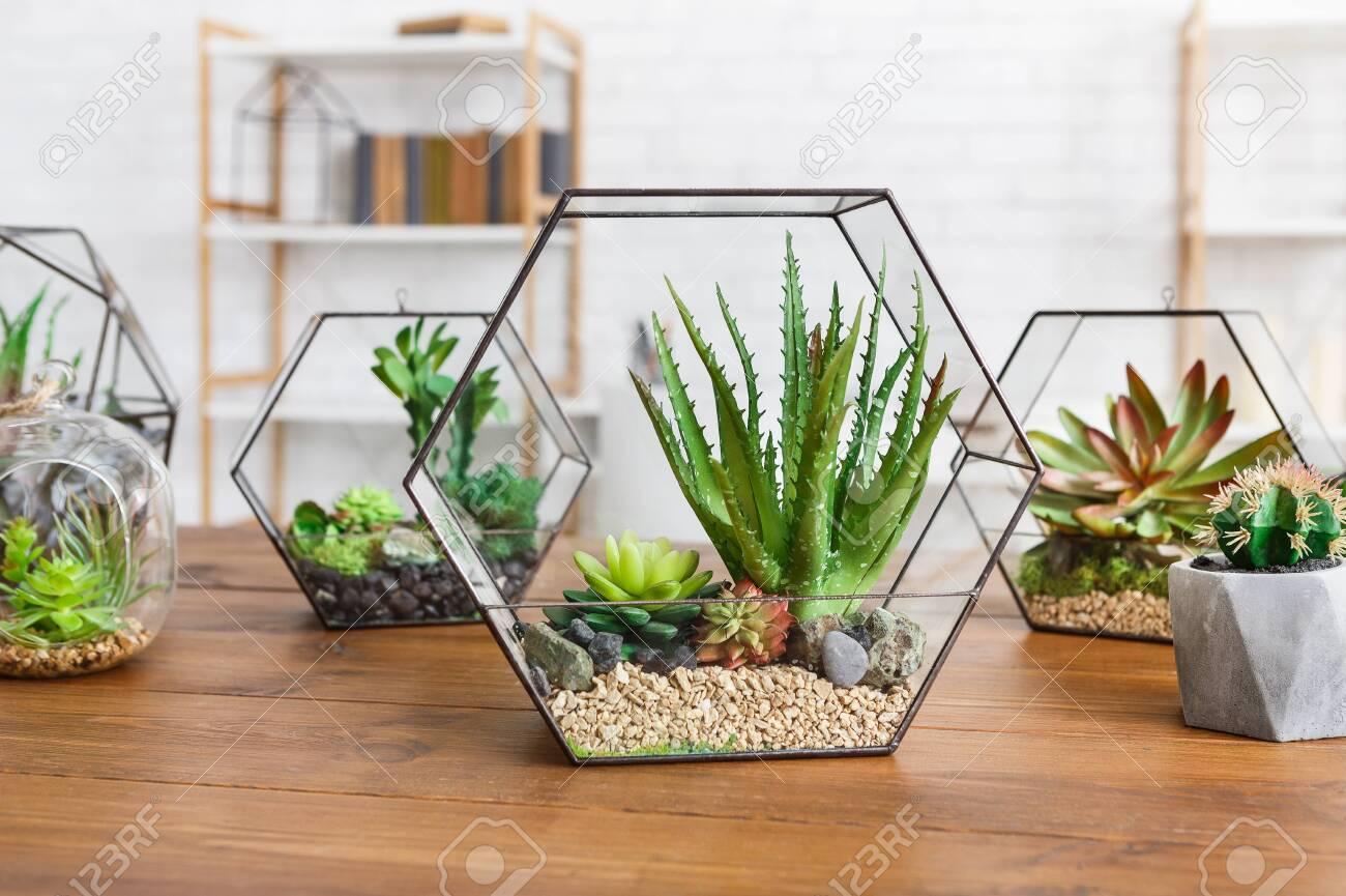 Geometric Glass Florarium Vase With Succulent Plants On Wooden