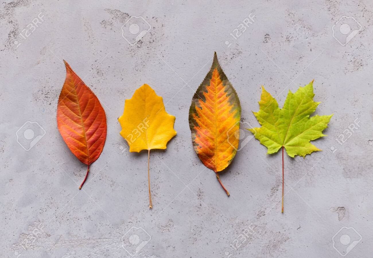 Bright and creative composition of different colorful autumn fallen leaves on grey - 130152841