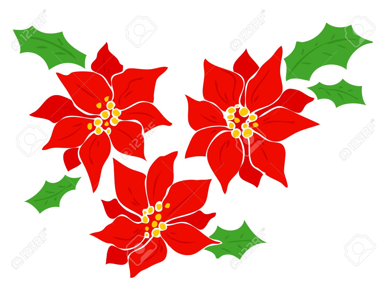 7 108 poinsettia stock vector illustration and royalty free