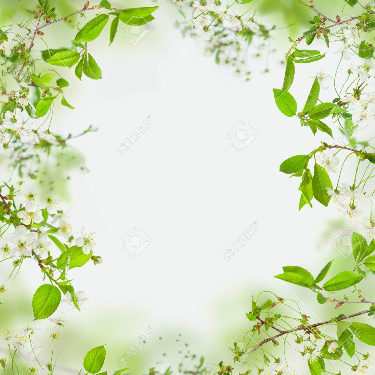 spring nature background frame of flowers and green leaves stock photo picture and royalty free image image 66690218 spring nature background frame of flowers and green leaves