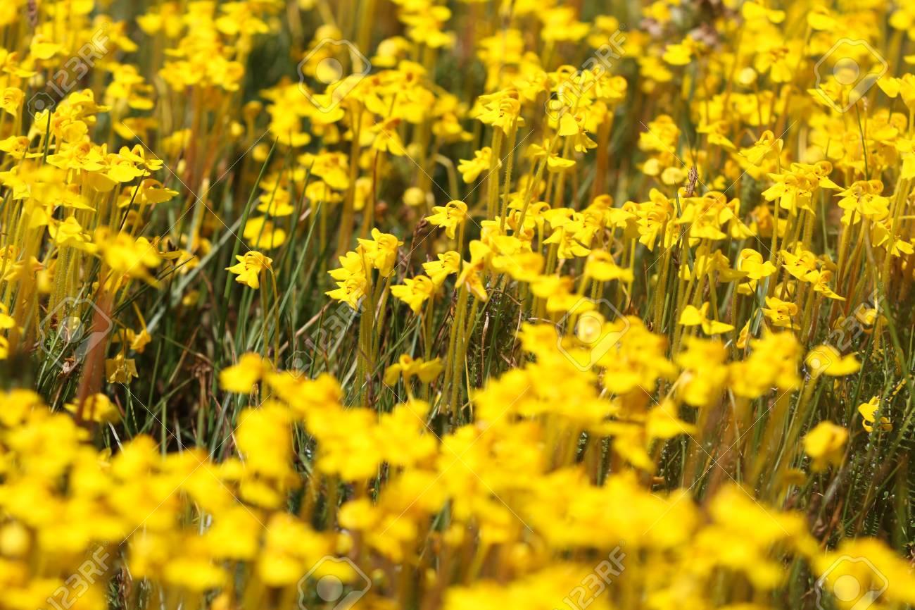 Little Yellow Flowers Lizenzfreie Fotos Bilder Und Stock Fotografie