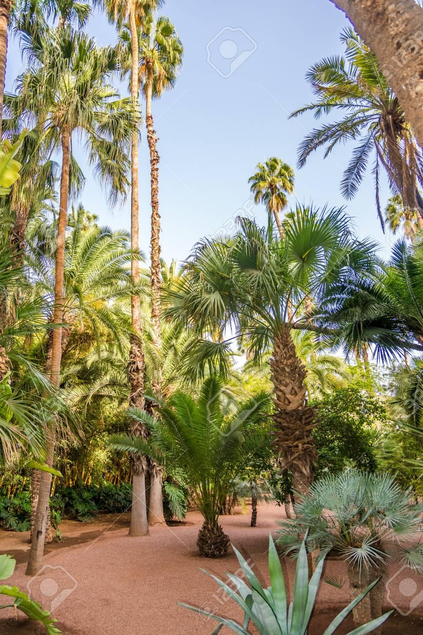 En El Jardin De Majorelle En Marrakech Marruecos