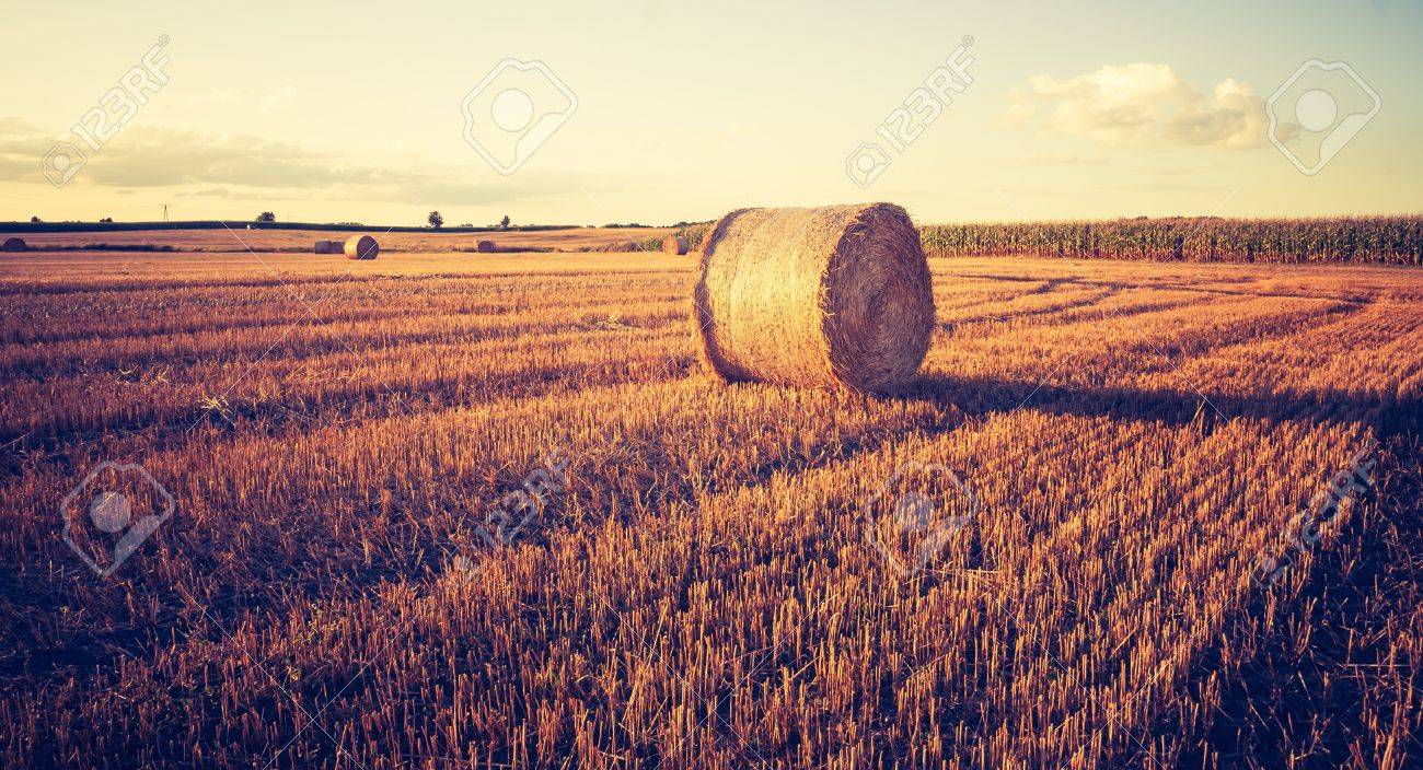 Mood Bilder beautiful field landscape with straw bales after harvest photo with