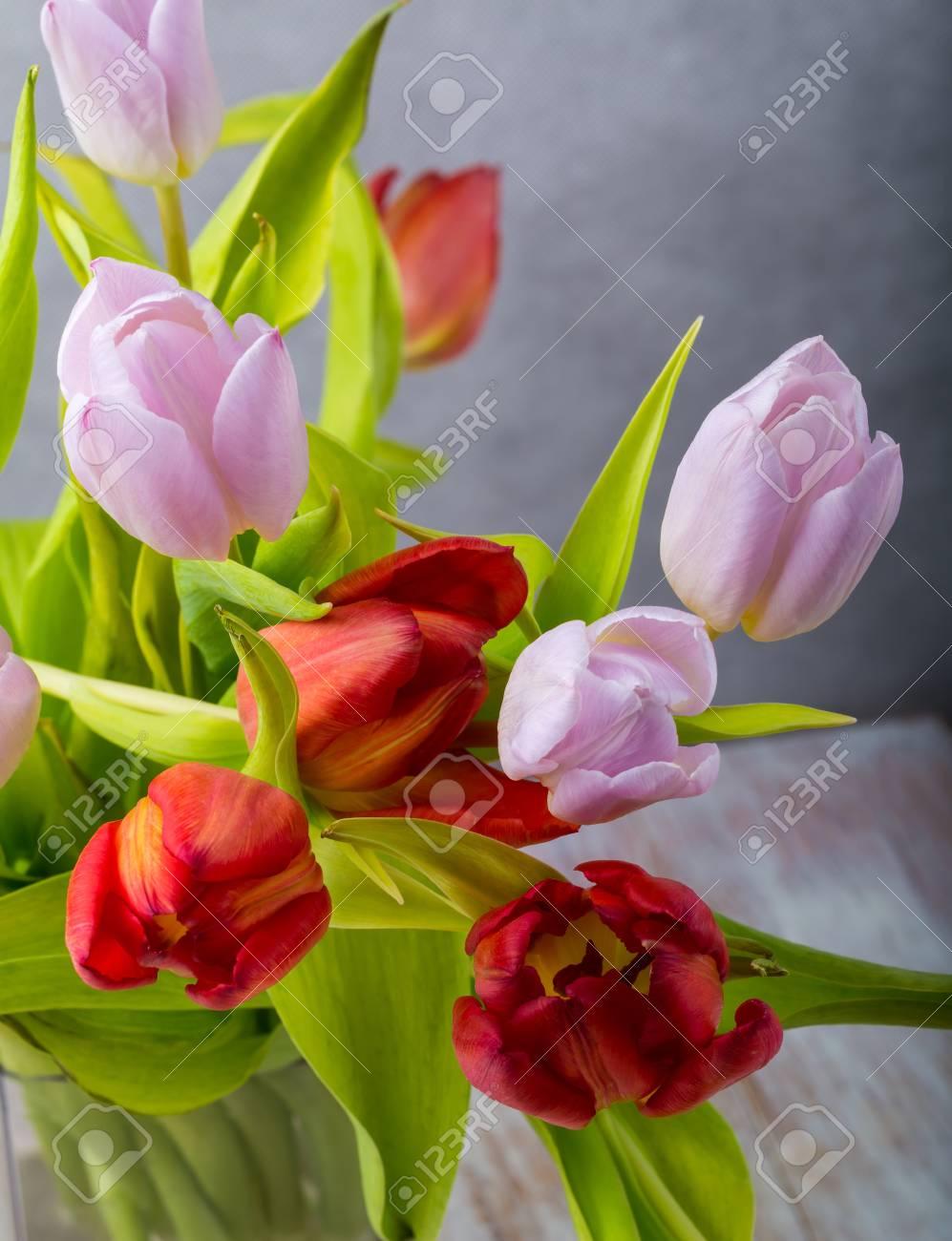 Studio Photo Of Tulips Beautiful Tulips Flowers Close Up Stock