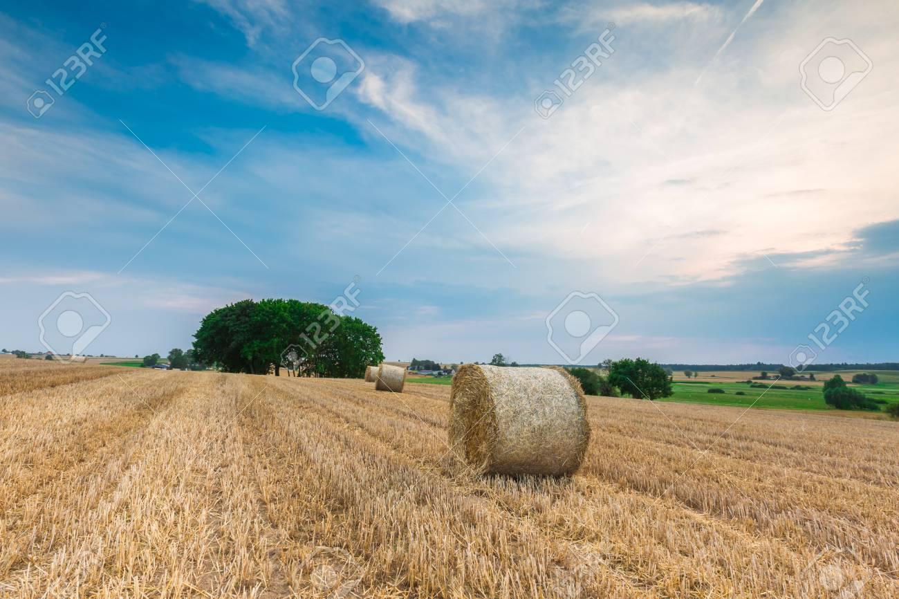 Stubble Field With Straw Bales Beautiful Summertime Rural Landscape