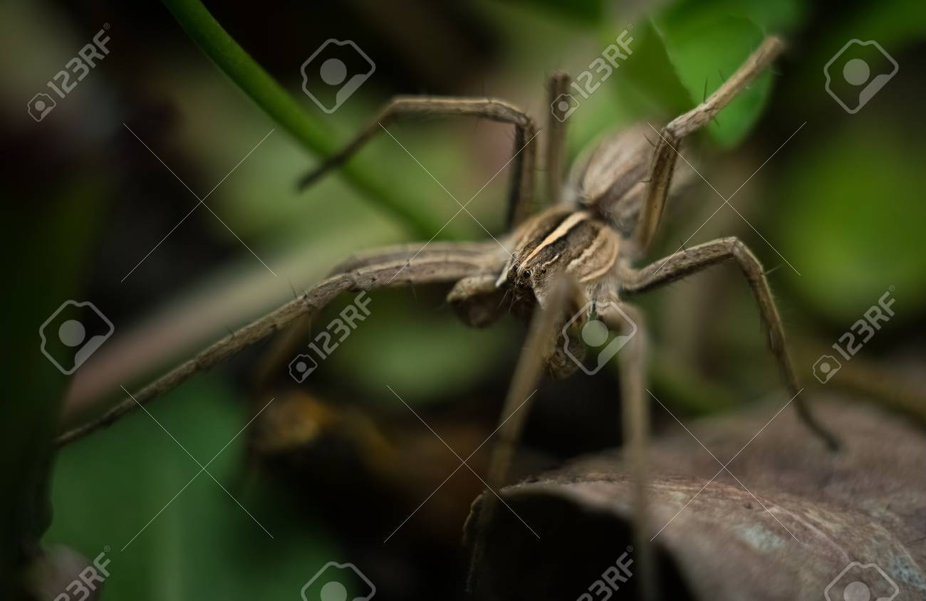 Beautiful Gray Garden Spider In Natural Environment Stock Photo ...