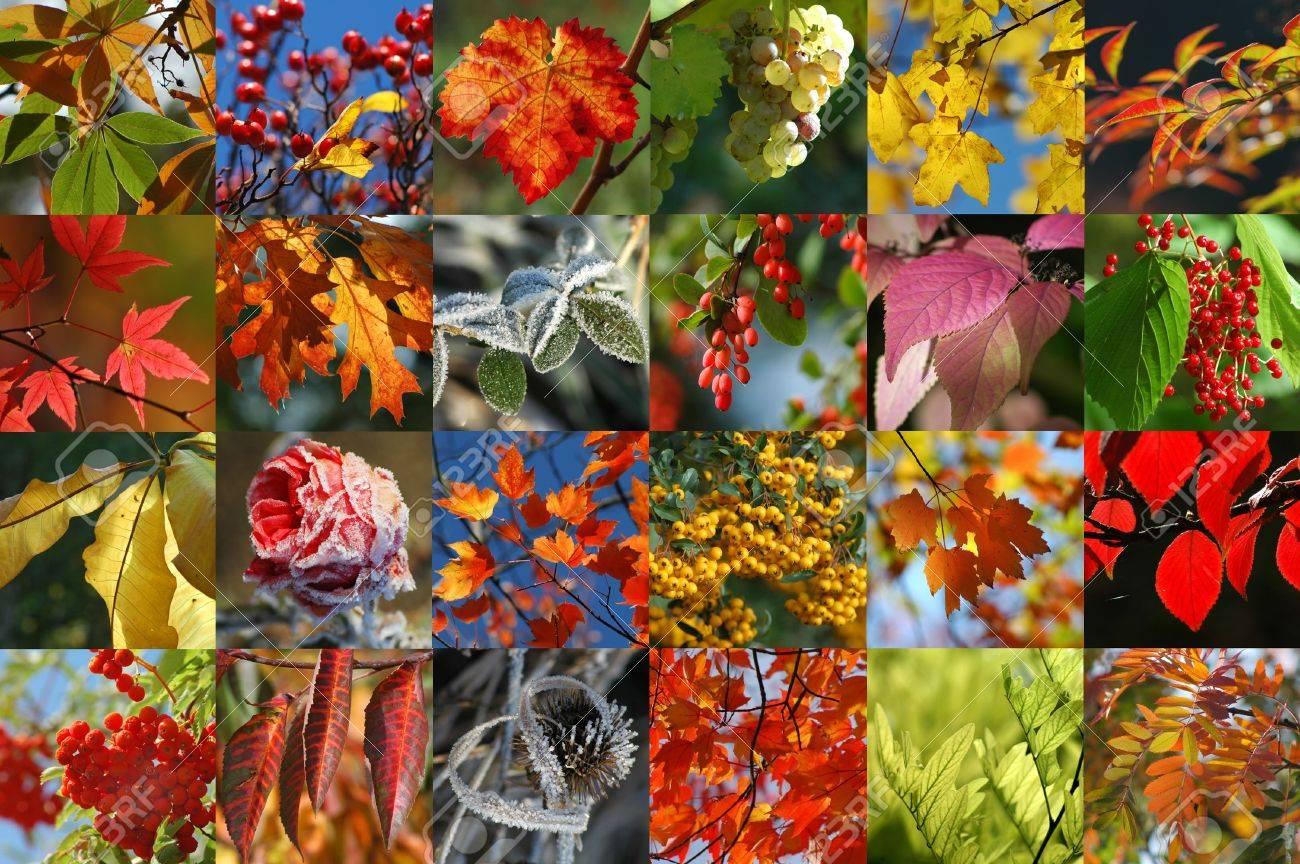 Autumn collection Stock Photo - 264029