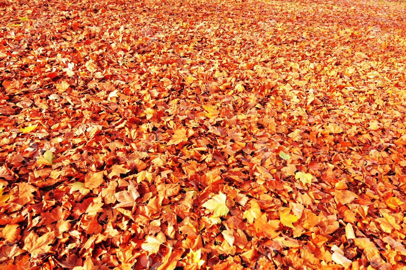 Autumn background Stock Photo - 11935262