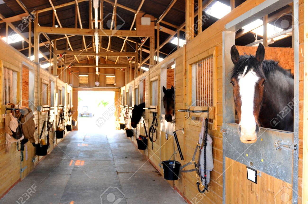 At the stables - 43922471