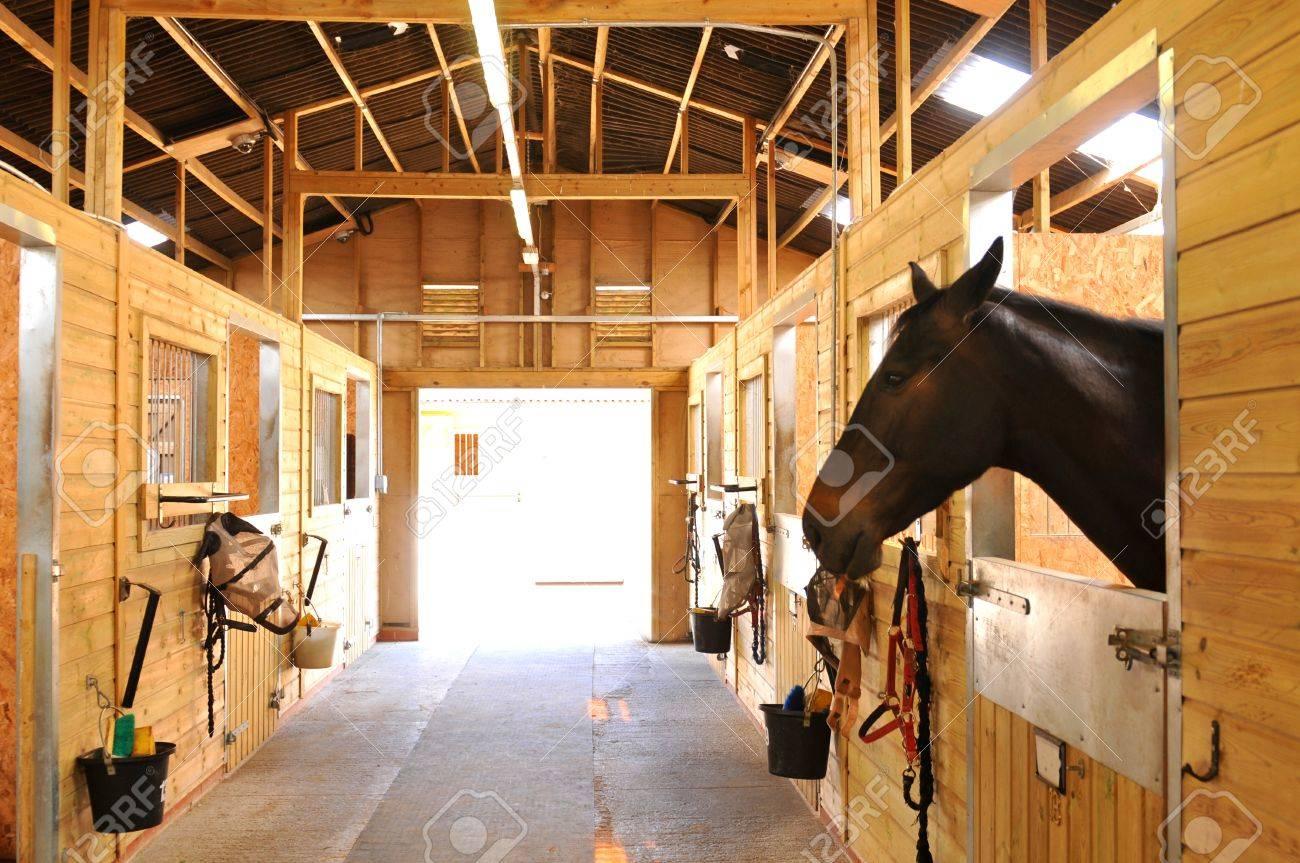 厩舎の馬の肖像 の写真素材・画像素材 Image 43922495.