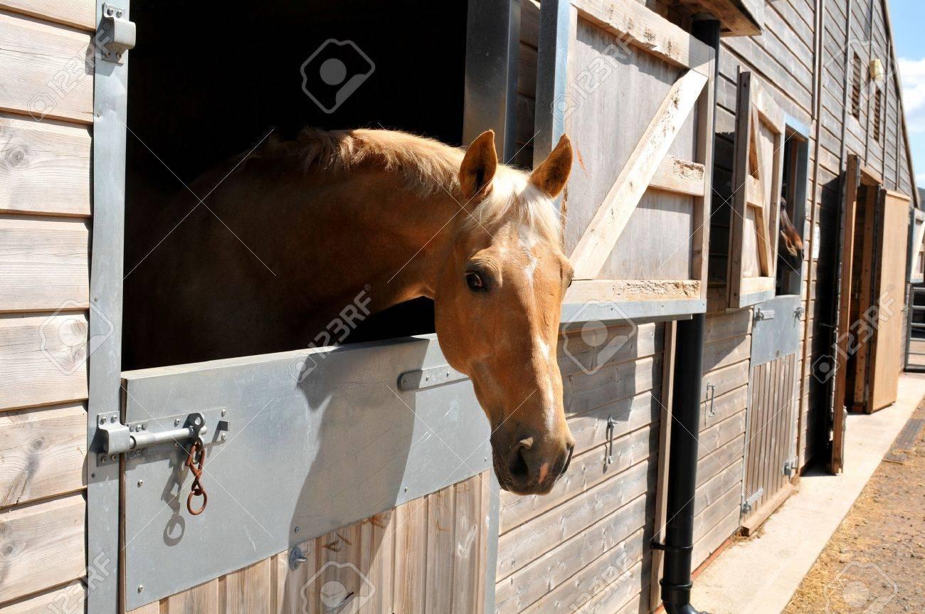 厩舎の馬の肖像 の写真素材・画像素材 Image 43922506.