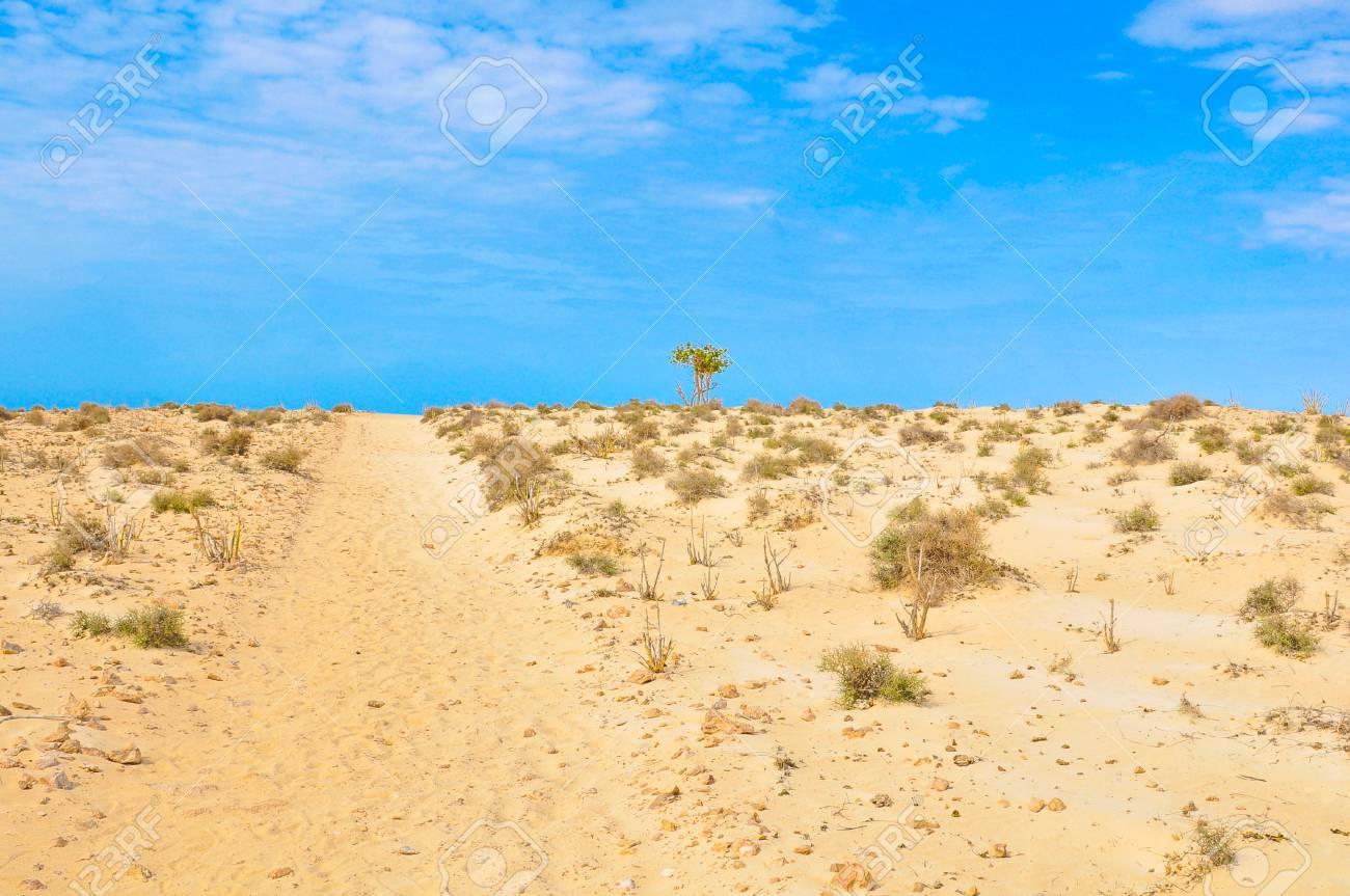 View of desert in Boa Vista, Cape Verde, Africa - 96293218