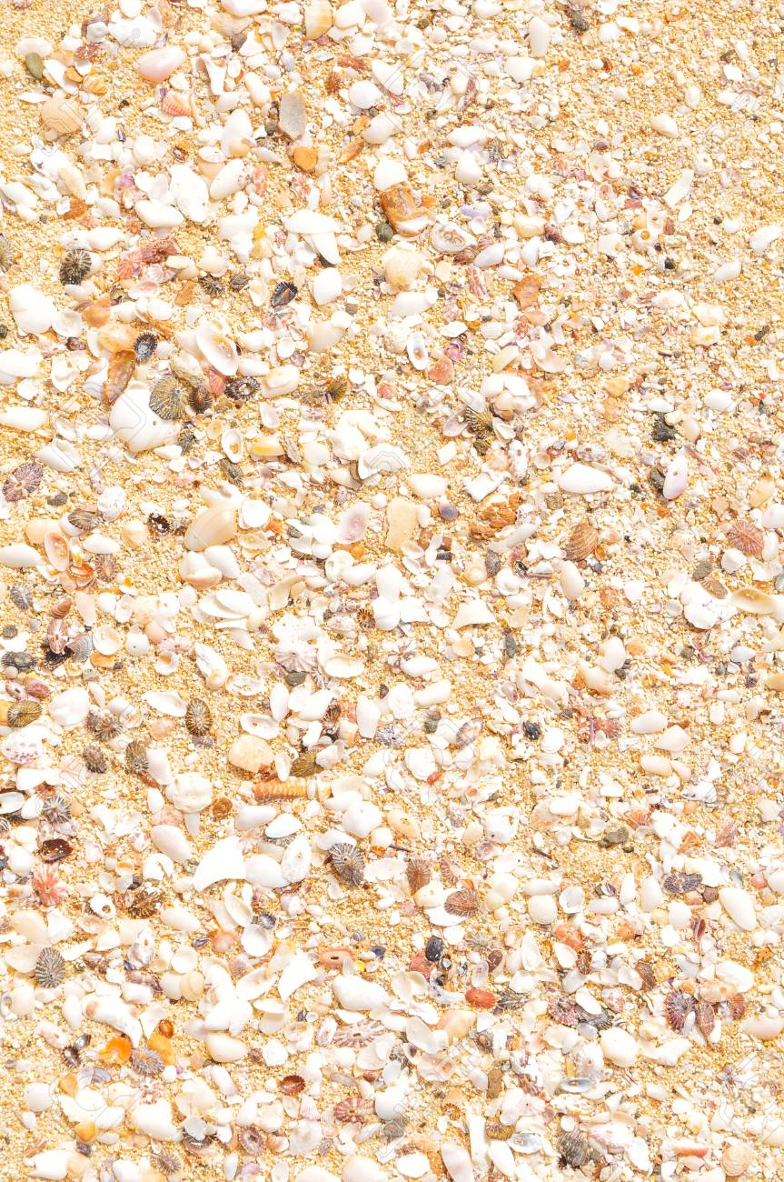 Detail of marine background with sea shells - 96398666