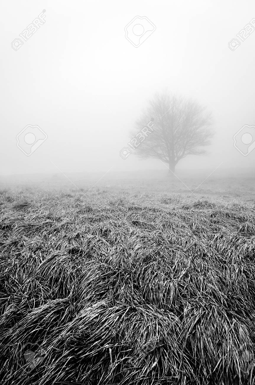 白と黒の霧と孤独、そして物寂し...