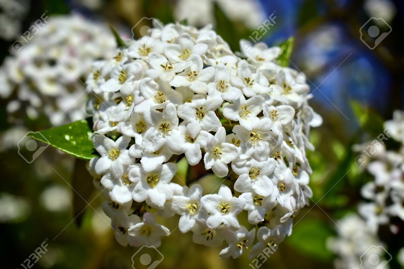Nature Flowers Environment Parks And Gardens Concept White