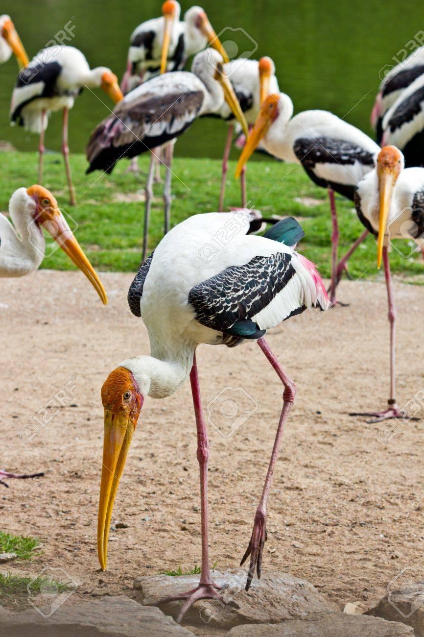 painted stork Stock Photo - 19906952