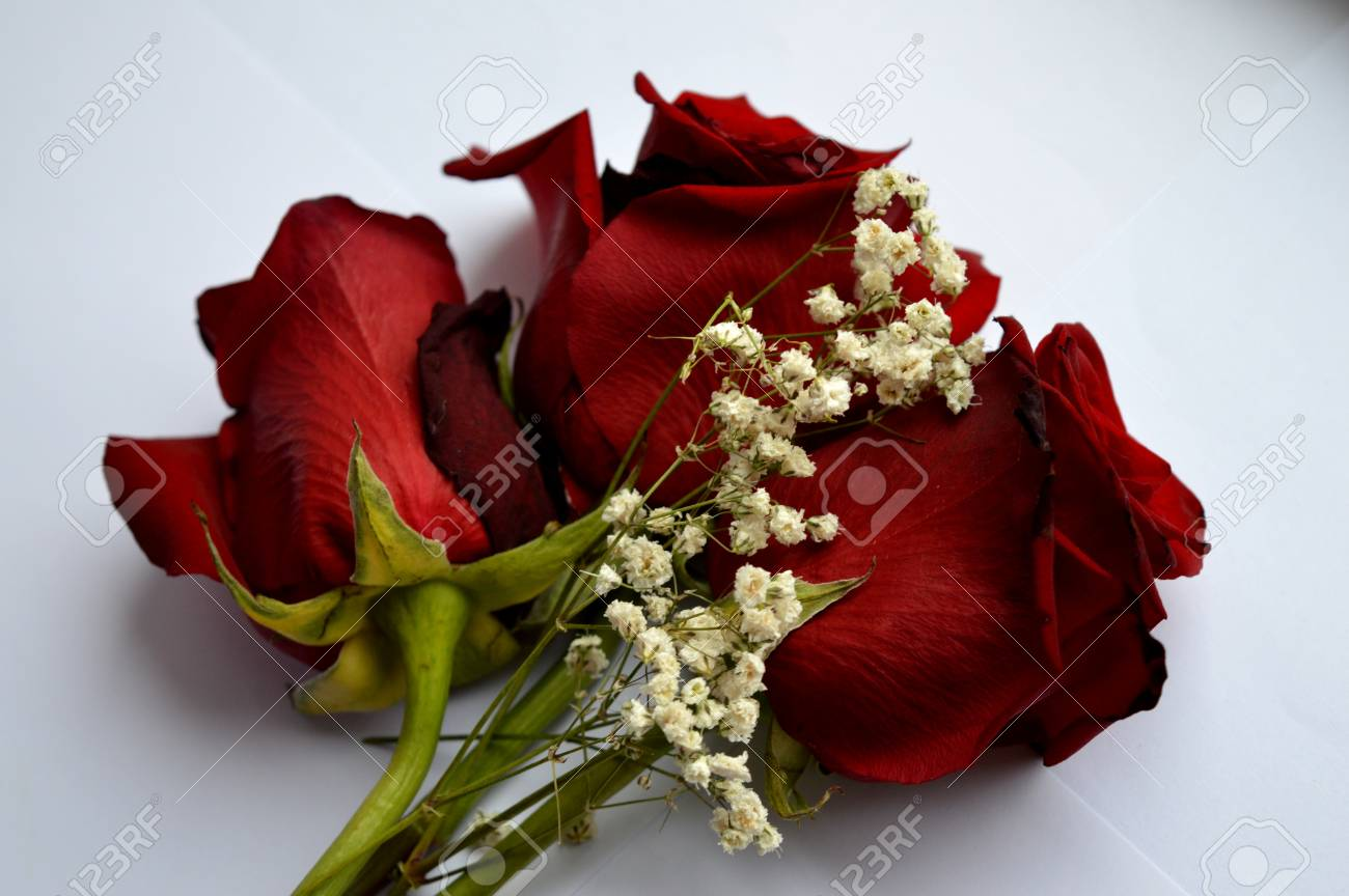 Beautiful red roses a combination of beauty and subtle naturalness beautiful red roses a combination of beauty and subtle naturalness stock photo 93599352 izmirmasajfo