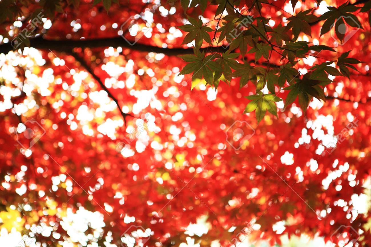 colored leaves In the park - 16003666