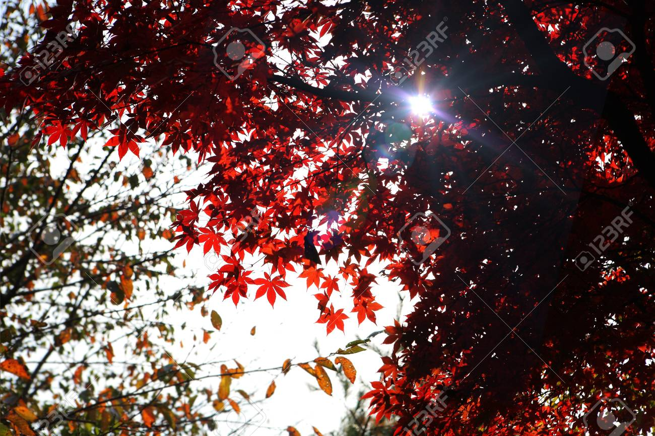 colored leaves In the park - 16003668