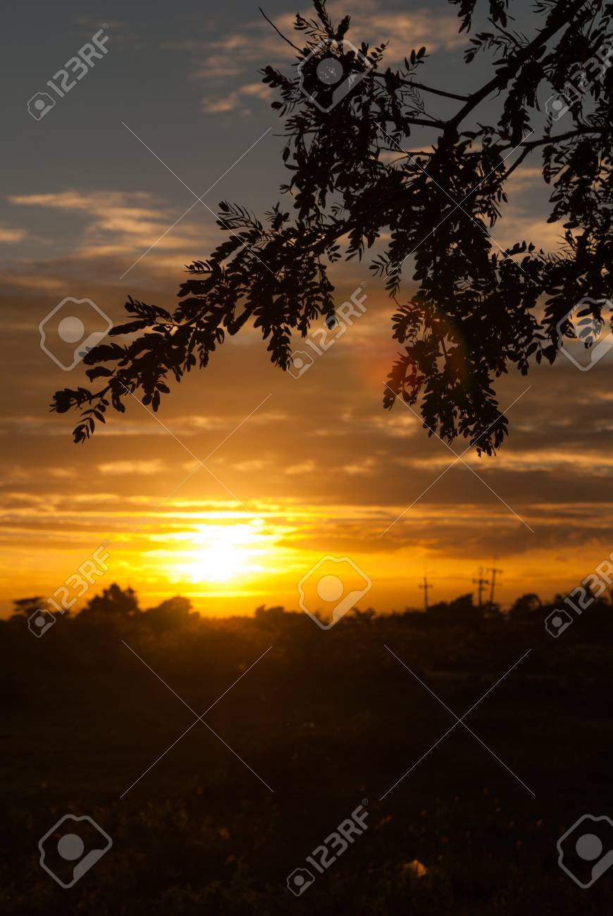 Sun and shadow of the tree  The structure Stock Photo - 14321432