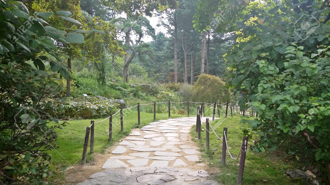 Stone road in the woods - 80598373