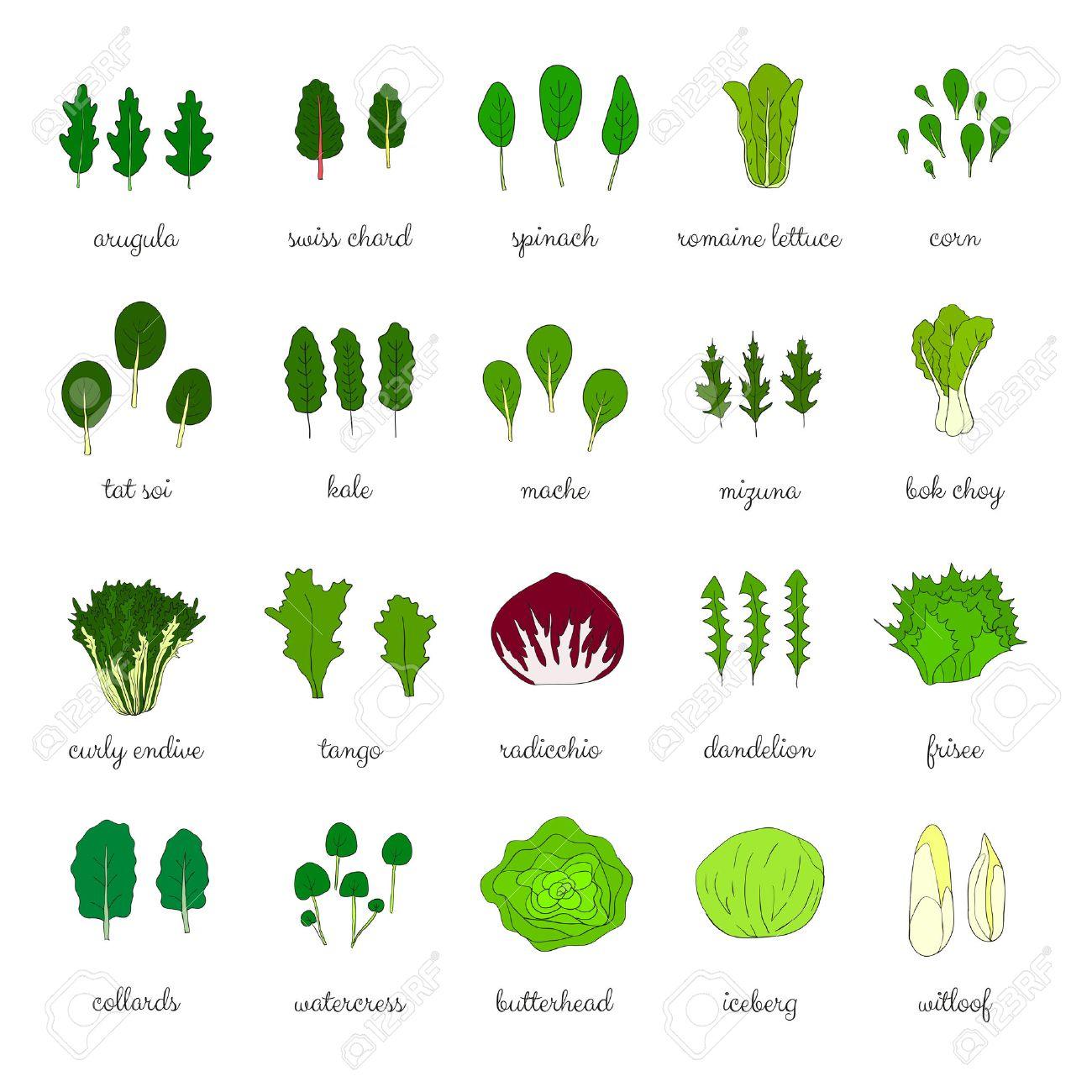 Image result for leafy greens