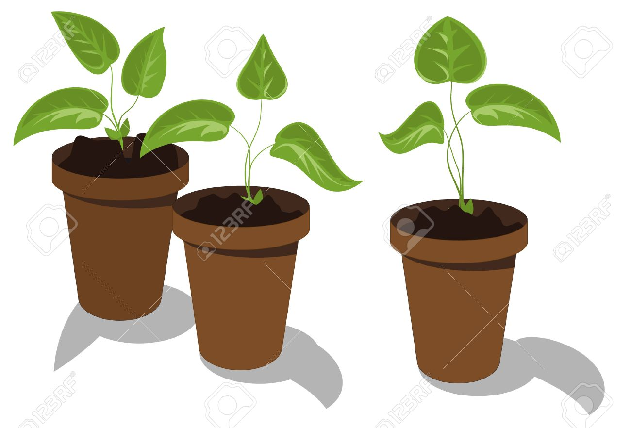 Young flower seedlings in pots Stock Vector - 6932028