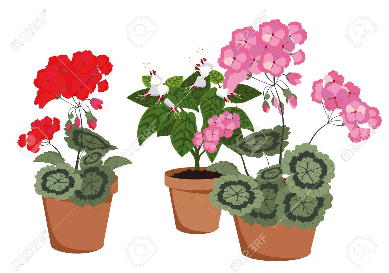 flowering houseplants in pots on a white background stock vector 17973438