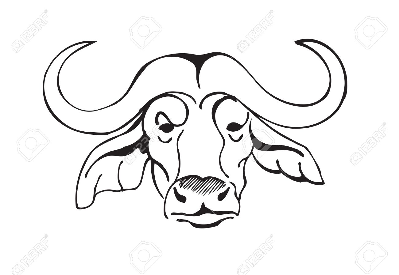 45d98a10b African buffalo head, black and white vector illustration Stock Vector -  55833786