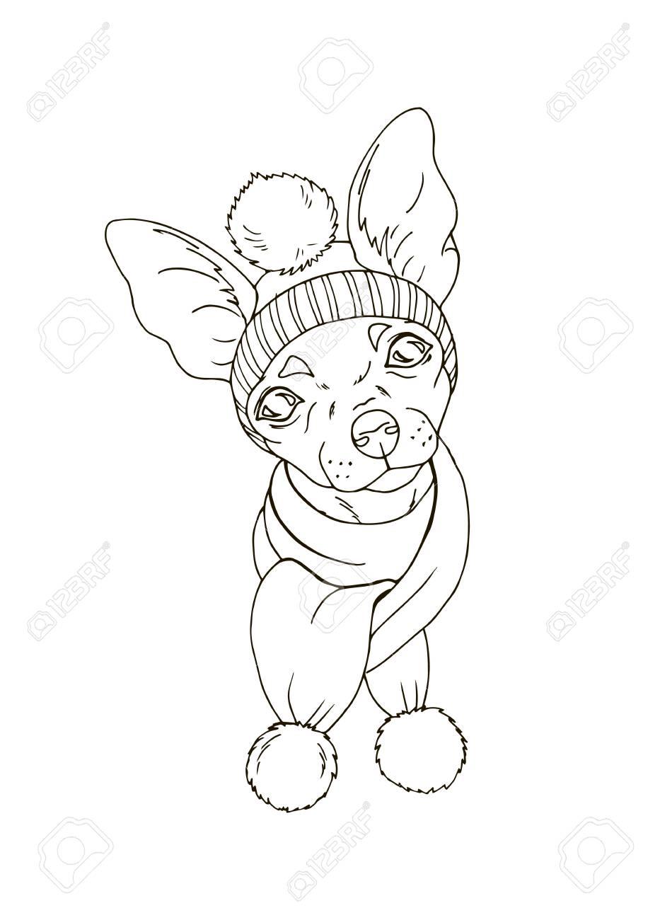 Chihuahua Con Sombrero Y Bufanda, Mascota En Traje De Invierno ...