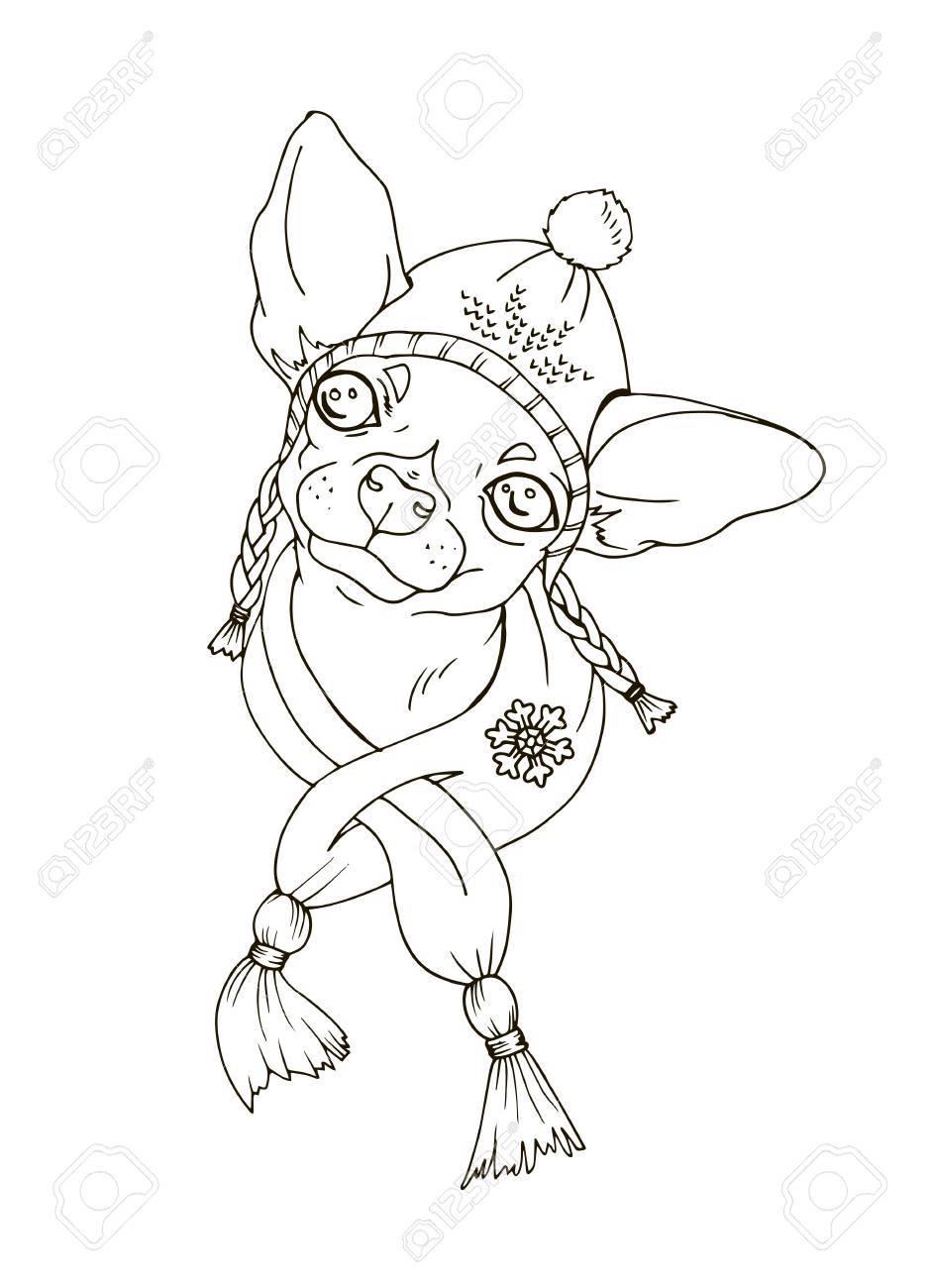 Coloriage De Chien De Compagnie.Chihuahua En Chapeau Et Echarpe Animal De Compagnie En Costume D