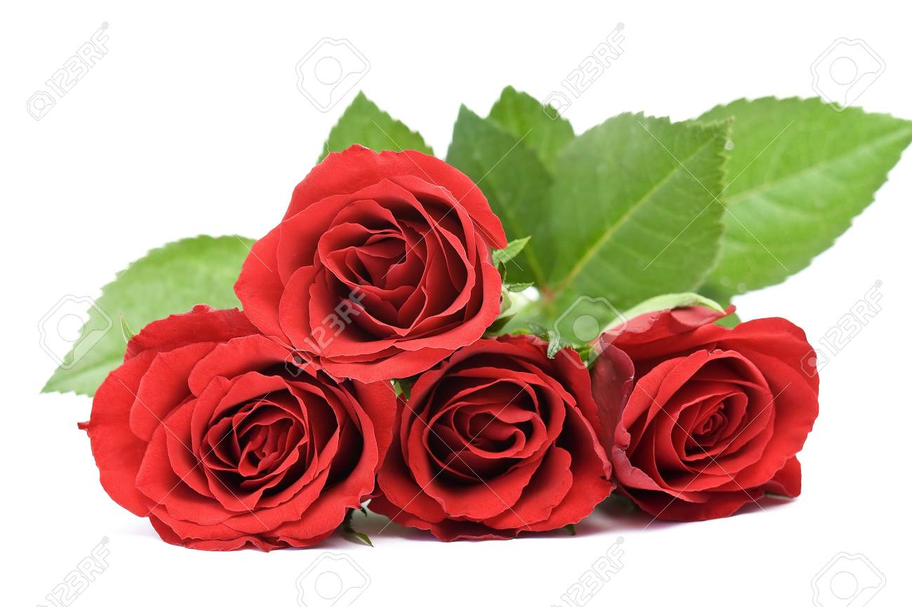 red roses Stock Photo - 13033249
