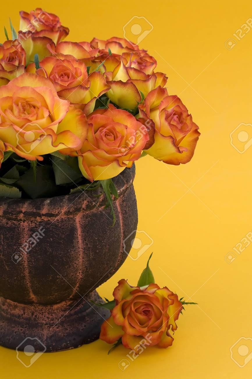 Tea Roses in vase Stock Photo - 13543932